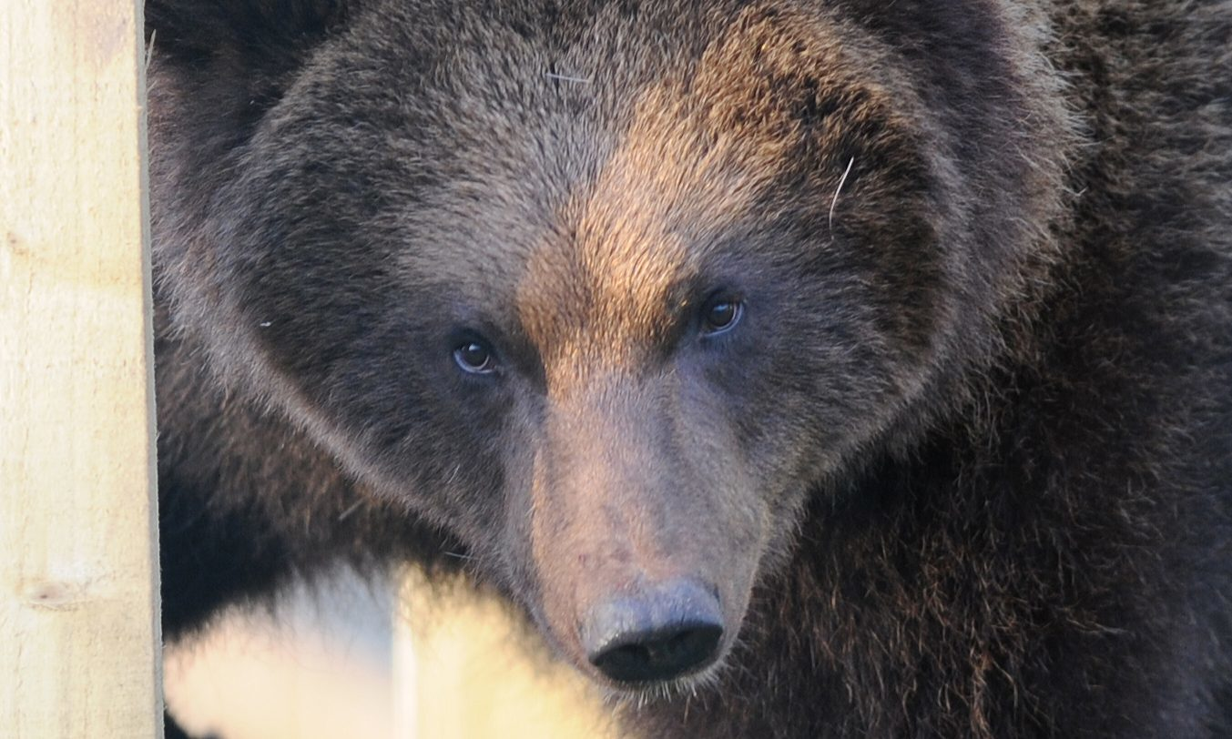 One of the new bears.