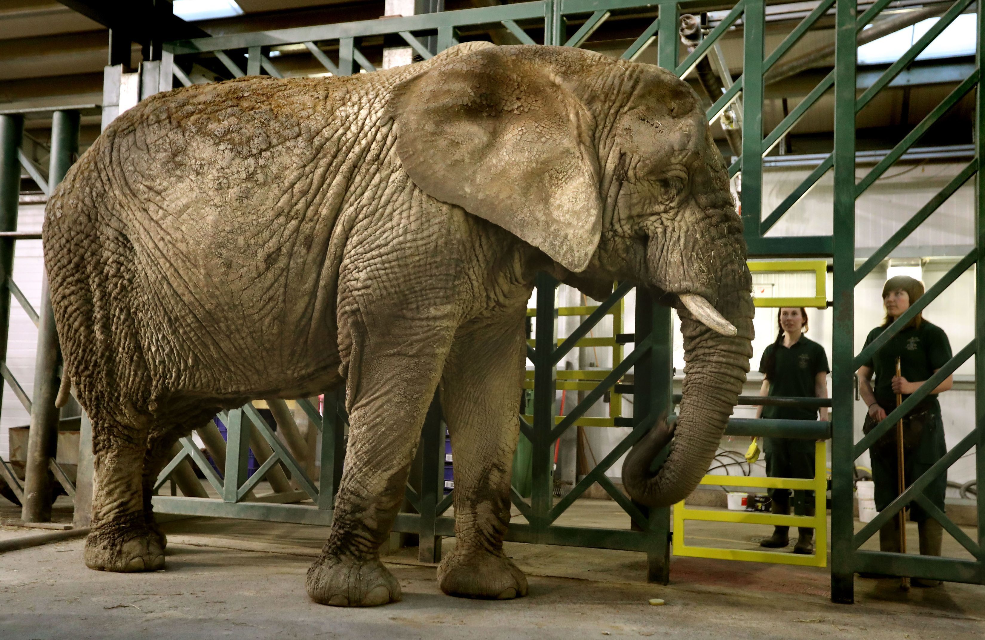Mondula the elephant whose neighbour Toto died in March 2016.