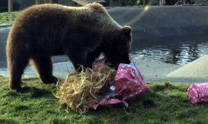 bears_birthday