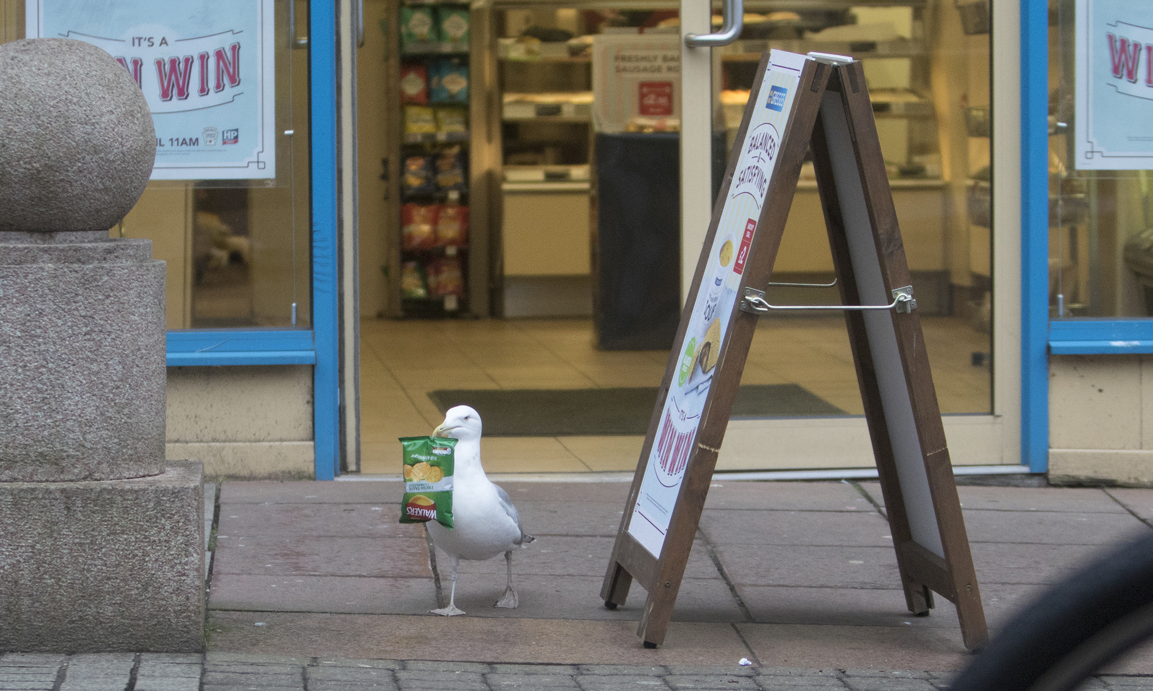 Steven Seagull bags another bag of salt and vinegar