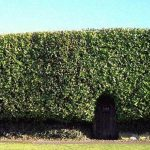 Does Scottish 'hedge rage' legislation get to the root of the problem?