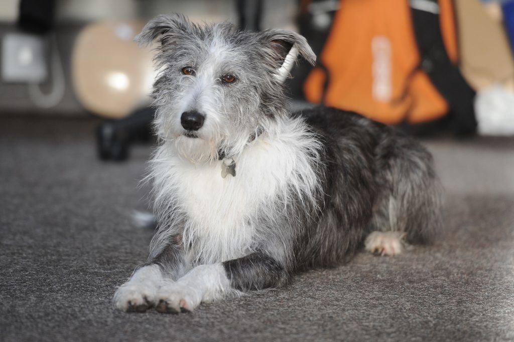 Dogs are welcome at Fleet Collective. Picture shows Ciara who comes in with Andy Flack
