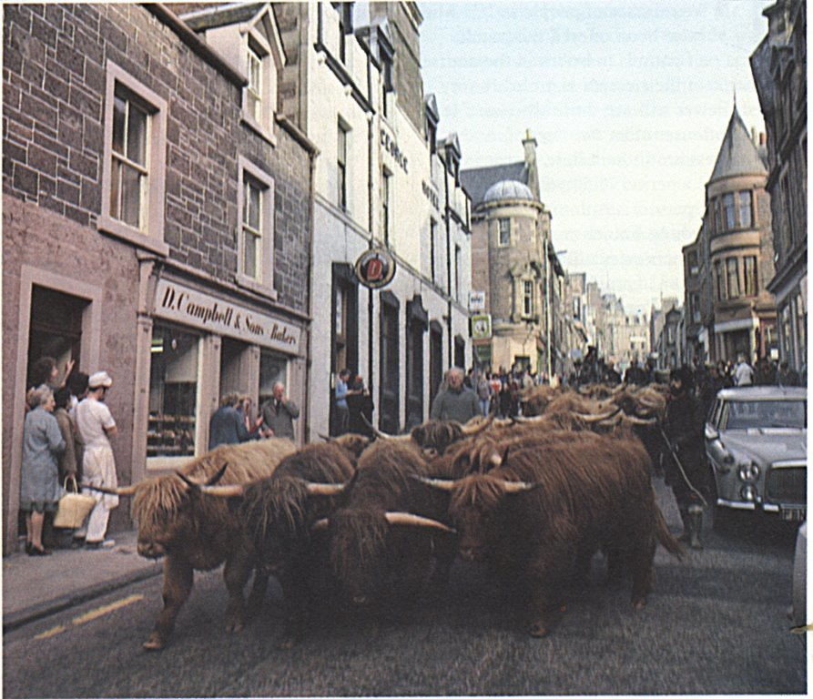 Highland coos file past the bakery in Crieff back in the day.