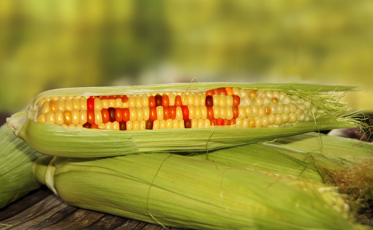 The Scottish Government has banned the growing of GM crops