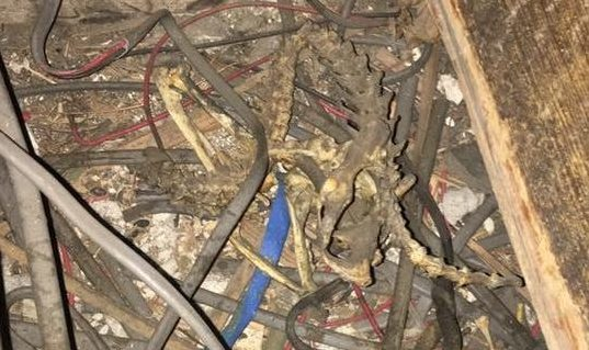 The skeleton was removed from the property after it was discovered.