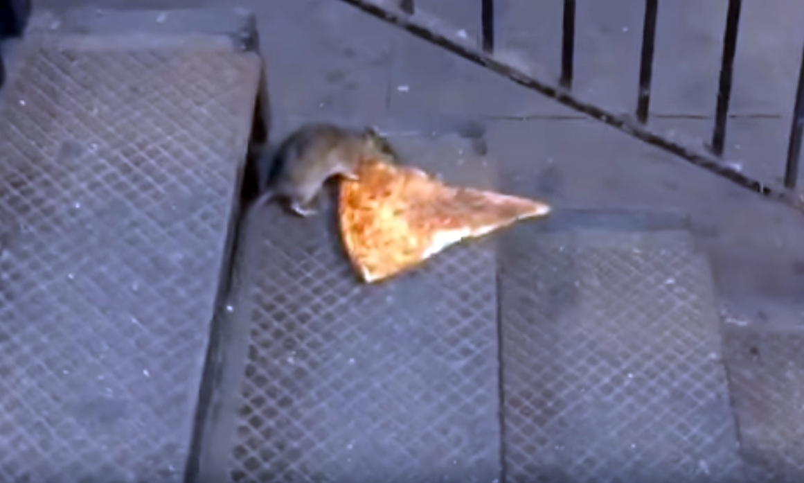 Pizza Rat is just one of countless hungry animals to become stars of the internet.