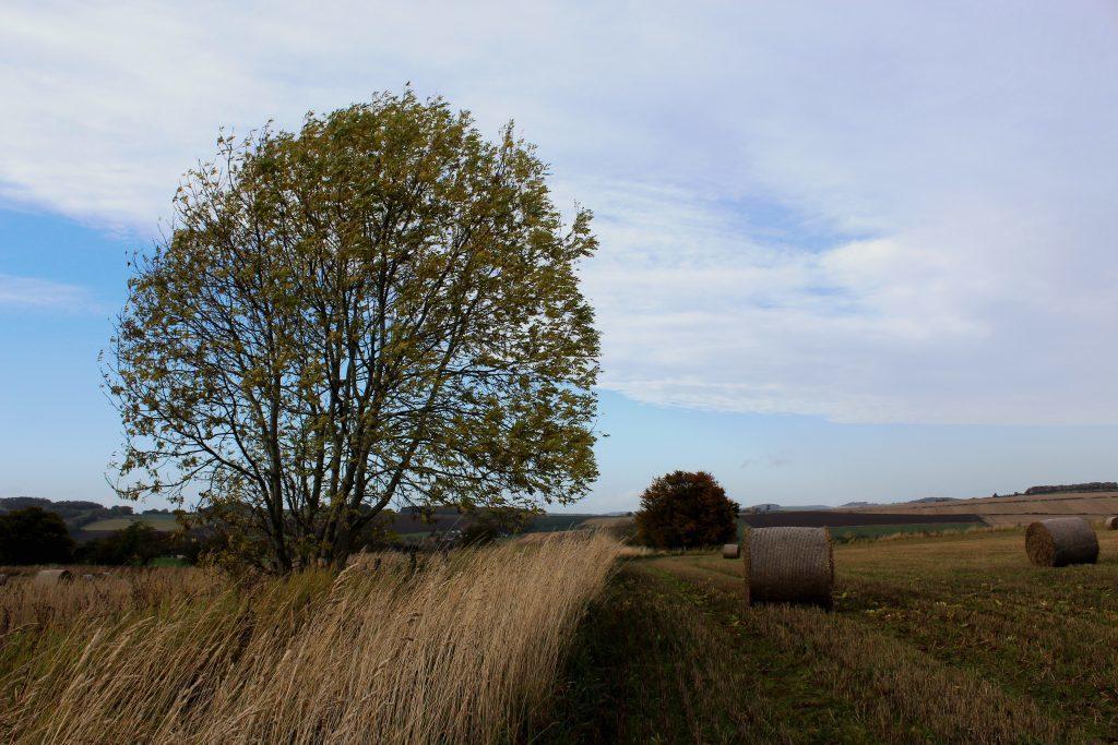 2 - Farmland on the outskirts of Ceres - James Carron, Take a Hike