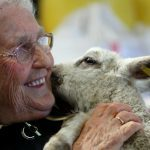 Ewe better believe it. Lamb Josie makes 80-year-old Margaret's birthday dreams come true