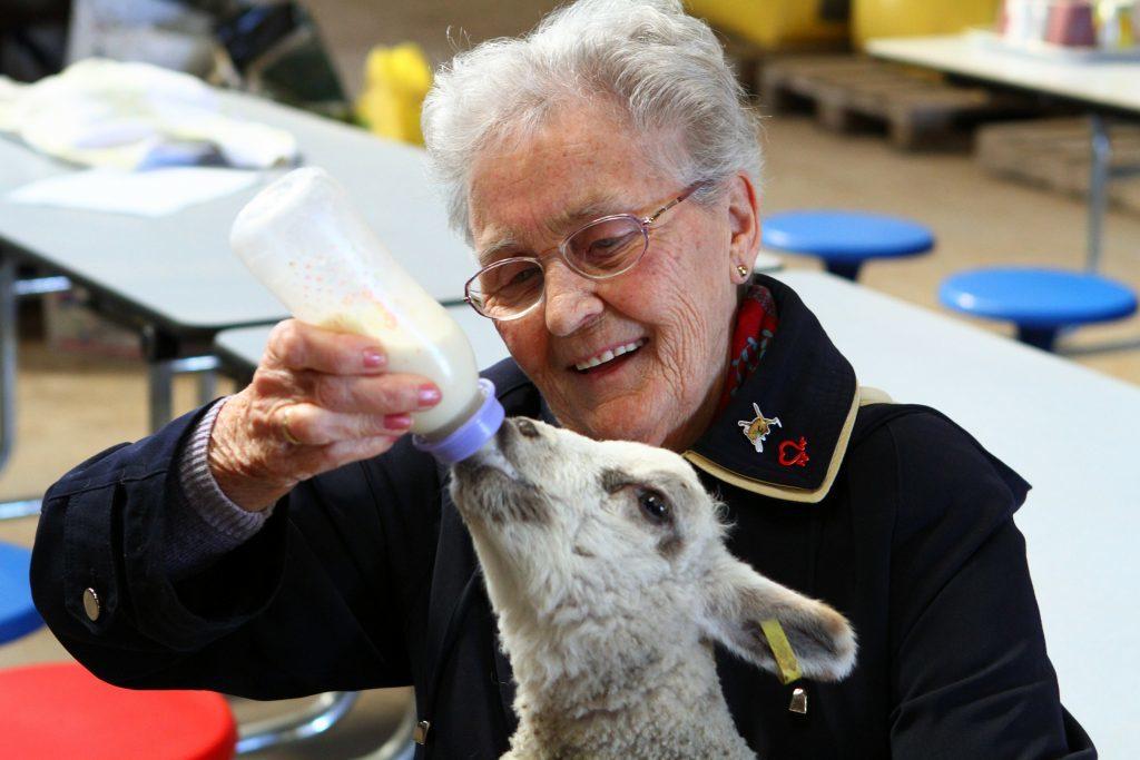 DNic_Lamb_Feeding_Margaret_Grubb