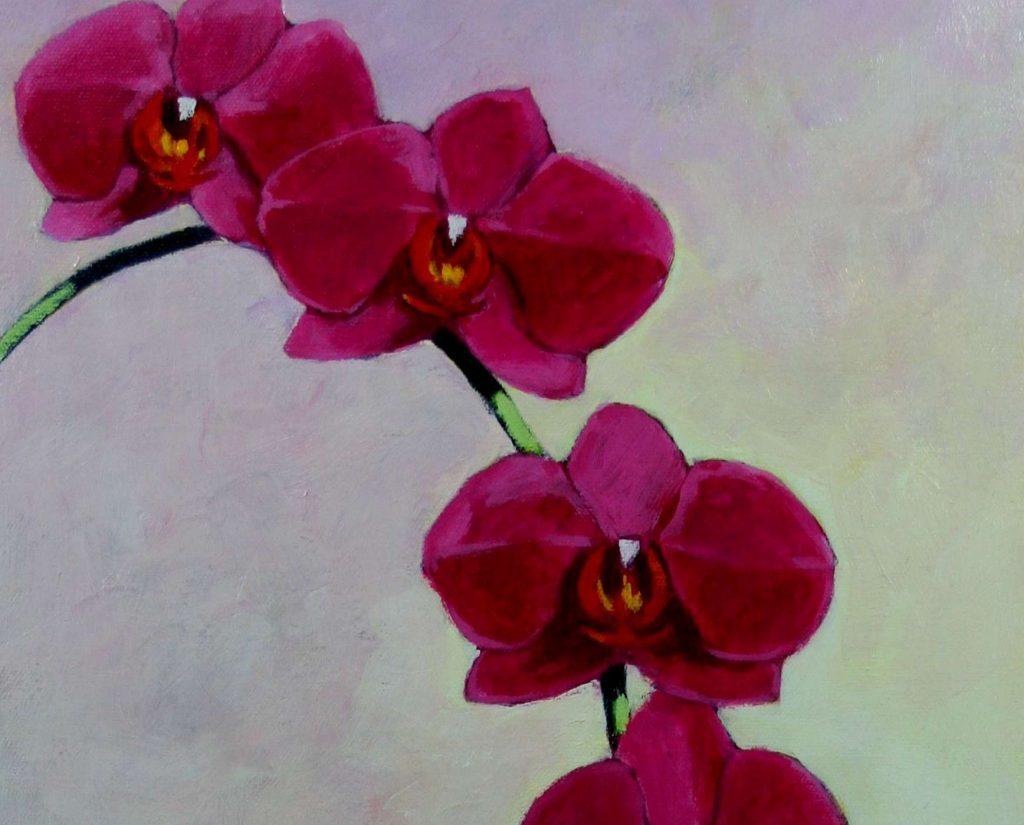 Deep Pink Phalaenopsis