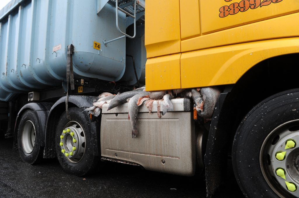 The fish spilled over the cab and coupling of the lorry.