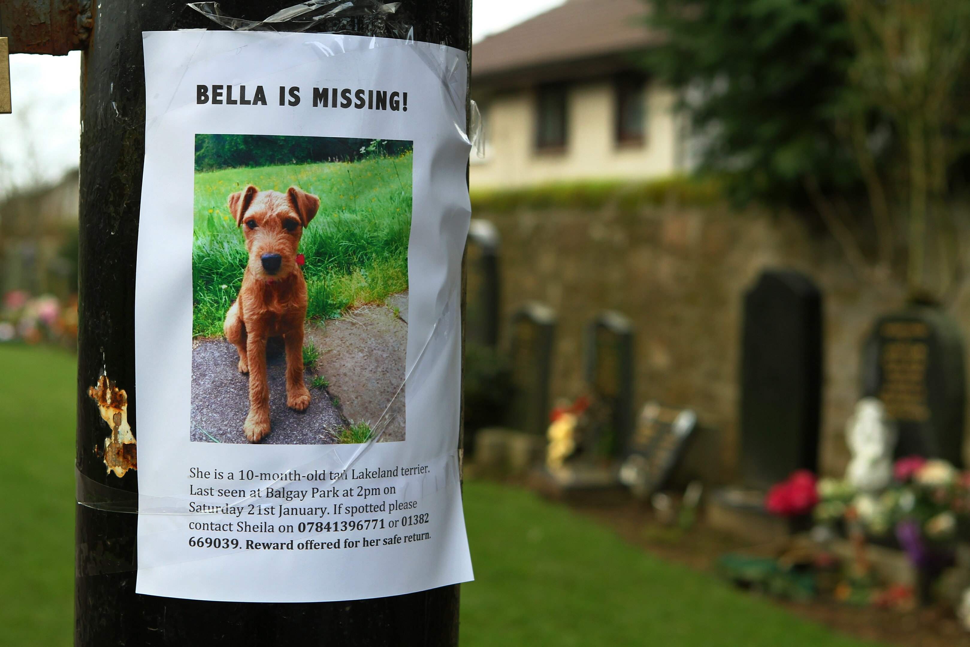 One of the flyers for missing dog Bella, on a post at Balgay Cemetery.