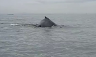 whale_sighting