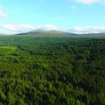 More Scottish farmers branch out into forestry