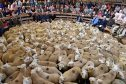 LAIRG, SCOTLAND - AUGUST 16:  People watch as sheep farmers gather at Lairg auction for the great sale of lambs on August 16, 2016 in Lairg, Scotland. Lairg market hosts the annual lamb sale, which is the biggest one day livestock market in Europe, when some twenty thousand sheep from all over the north of Scotland are bought and sold.  (Photo by Jeff J Mitchell/Getty Images)