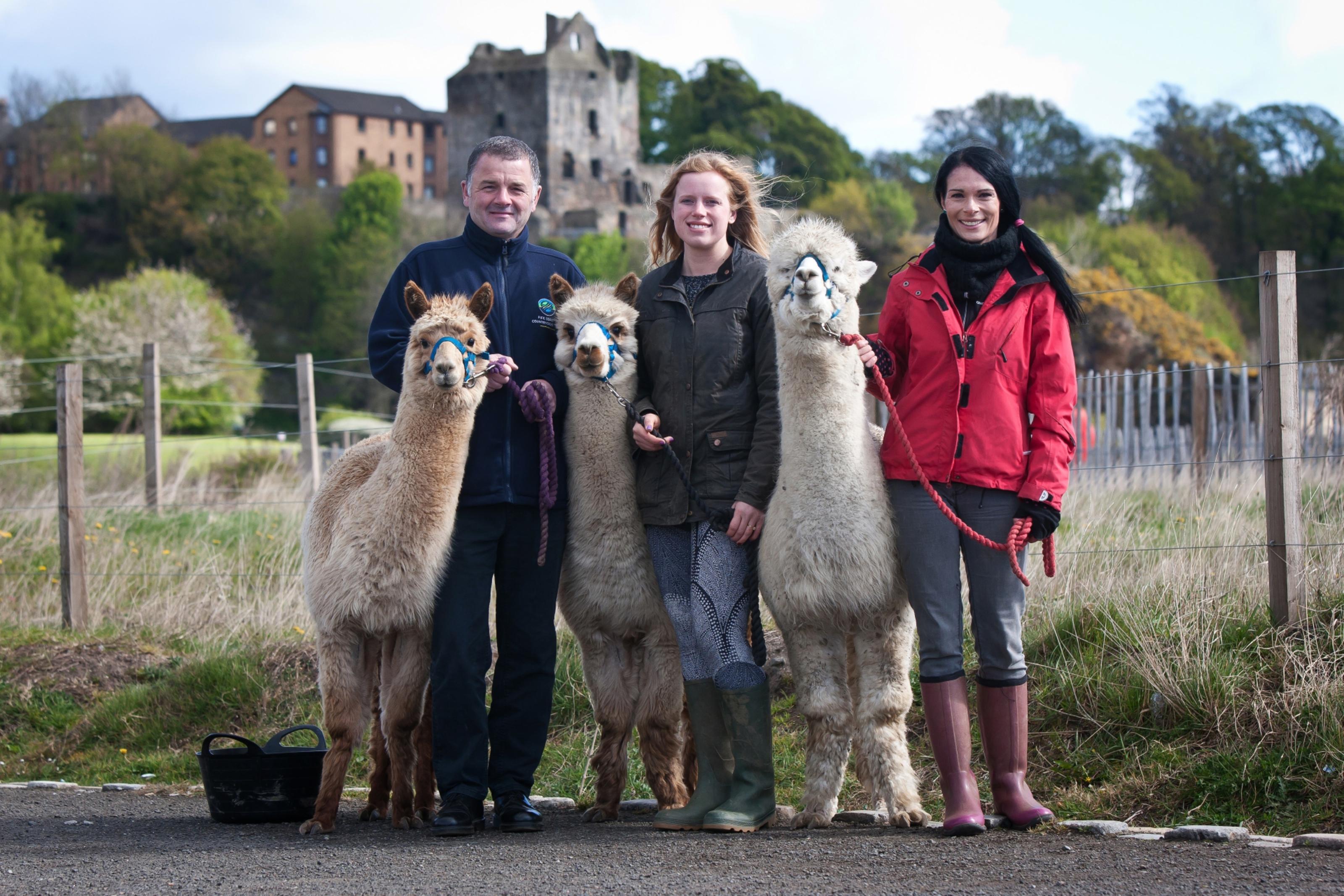 Gayle Ritchie meets Bowbridge alpacas on Kirkcaldy's Pathhead Sands. L-R: Robbie Blyth, coastal team leader of Fife Coast and Countryside Trust, Sarah Johnson, Gayle Ritchie and alpacas Balthazar, Lughaidh and Ajax.