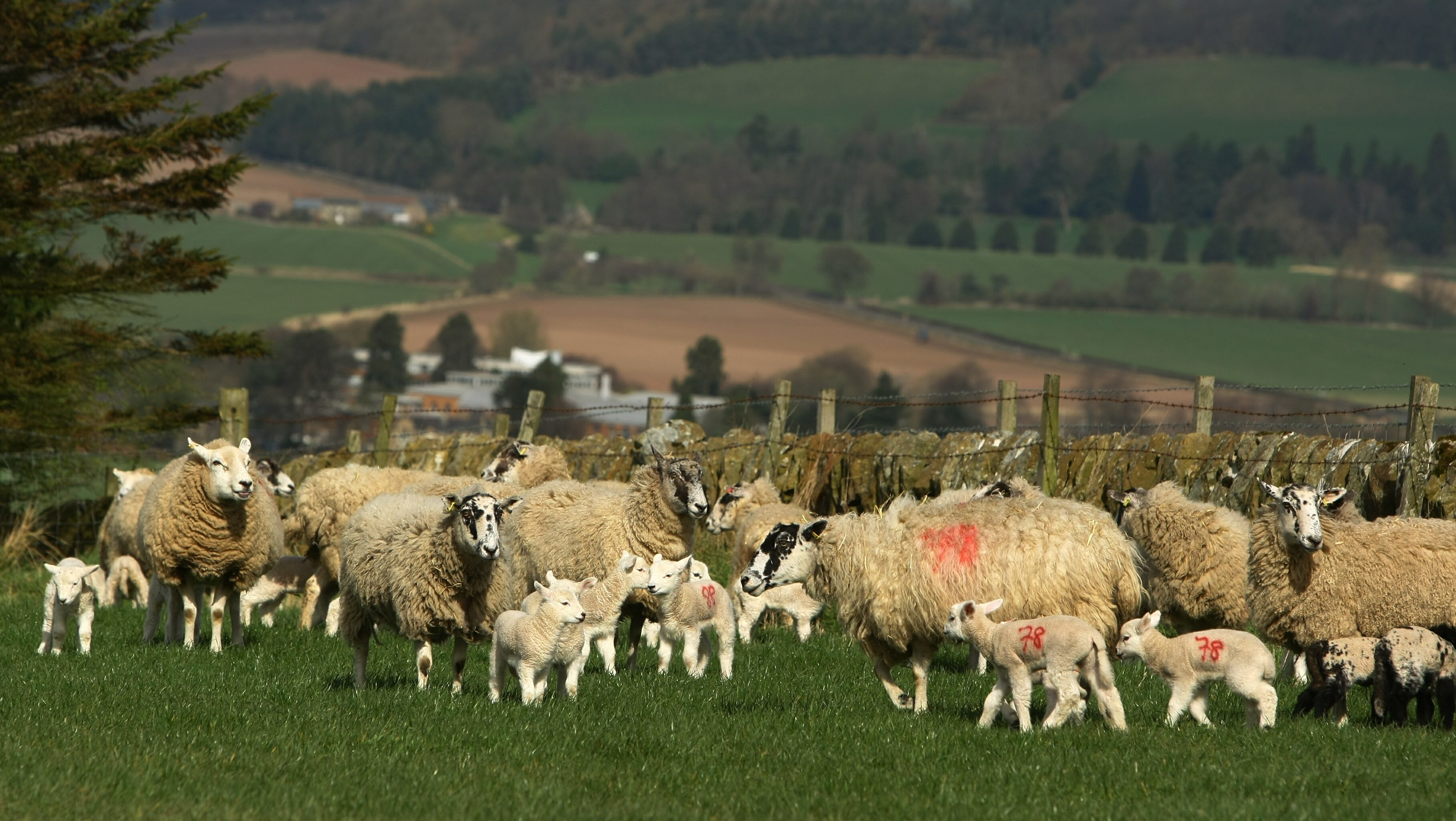 If sheep are profitable they are valued more highly