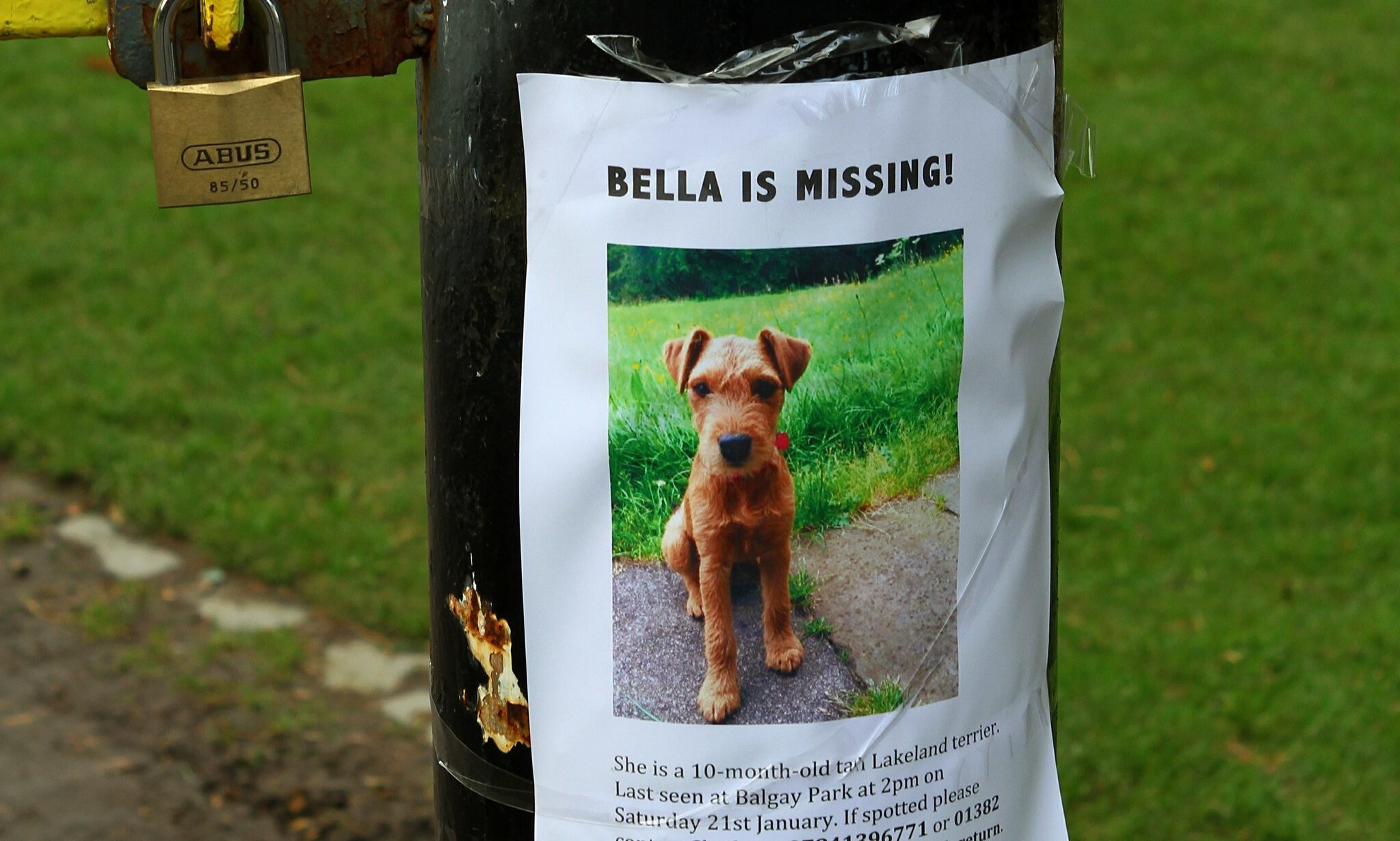 Bella has been missing since January.