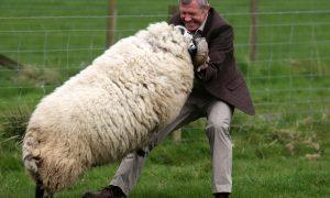How will ewe be voting?