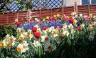 Early spring bulbs in flower