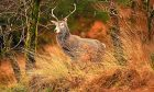 Deer management is in dire need of reform in Scotland, according to Jim.