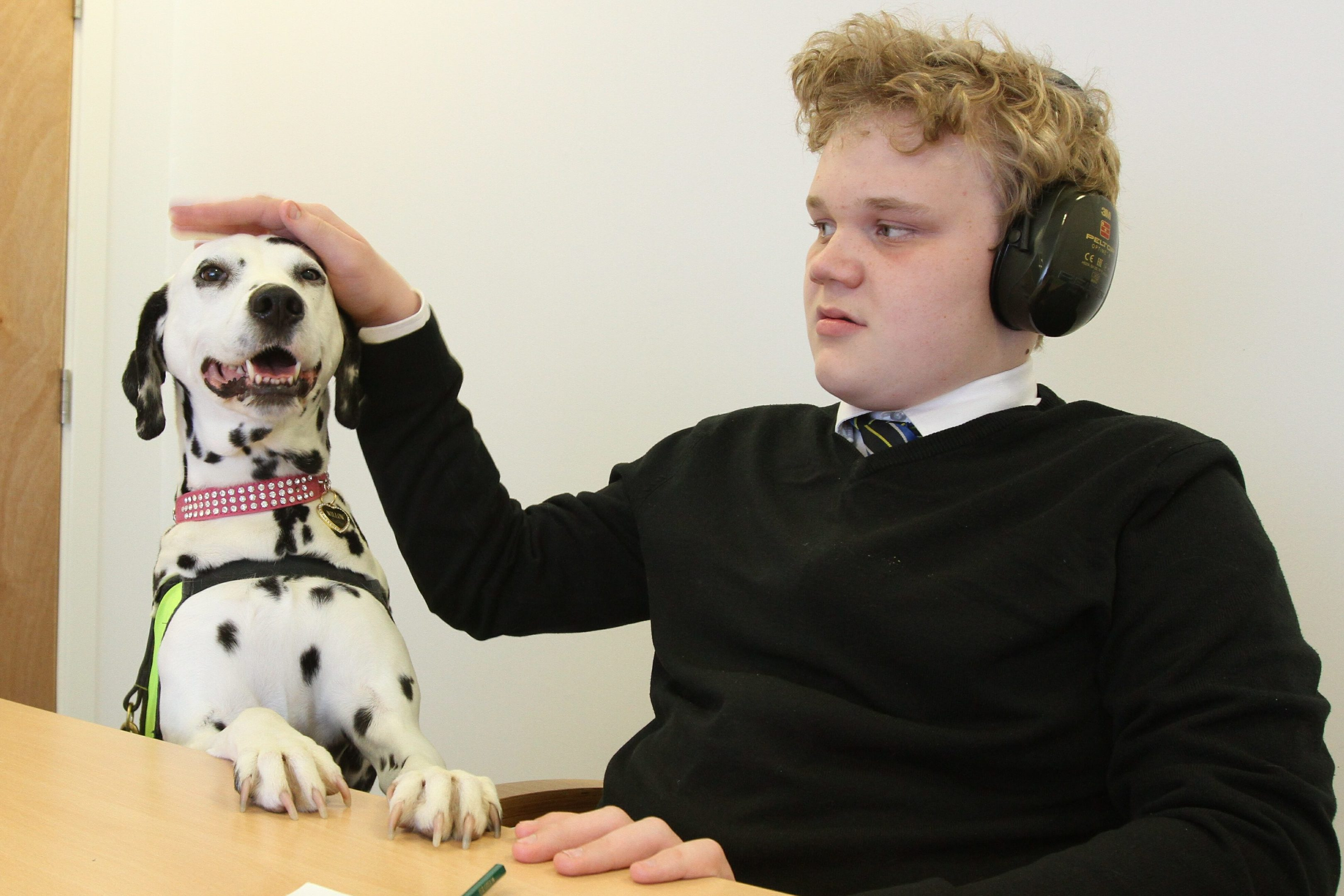 Dalmatian Willow is eager to impress pupil George Valance.