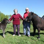 Kerryston Shetland stud approaches 30 year anniversary