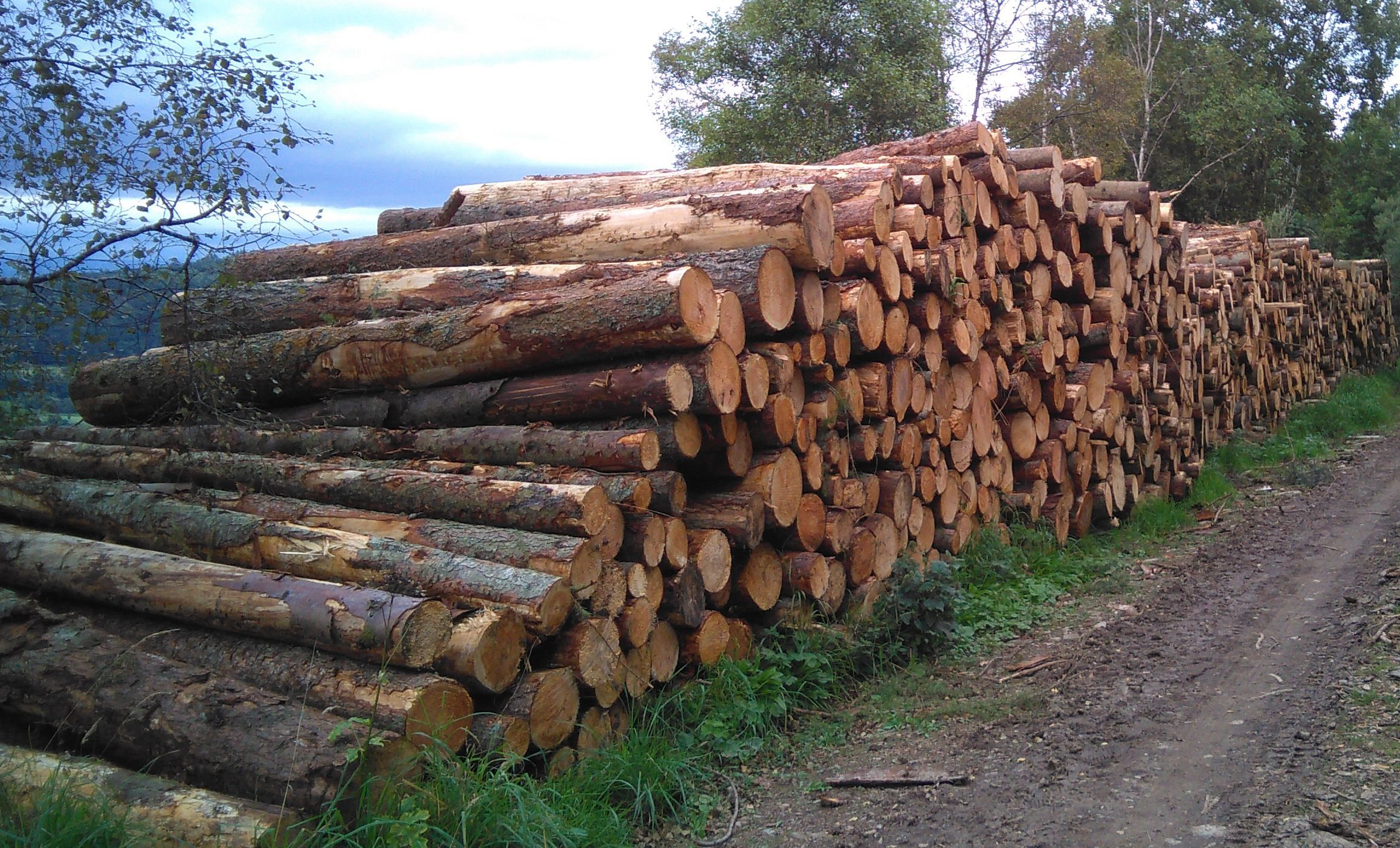 Demand is growing for forestry land