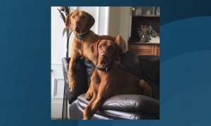 Buster (front) has been missing since Saturday morning.