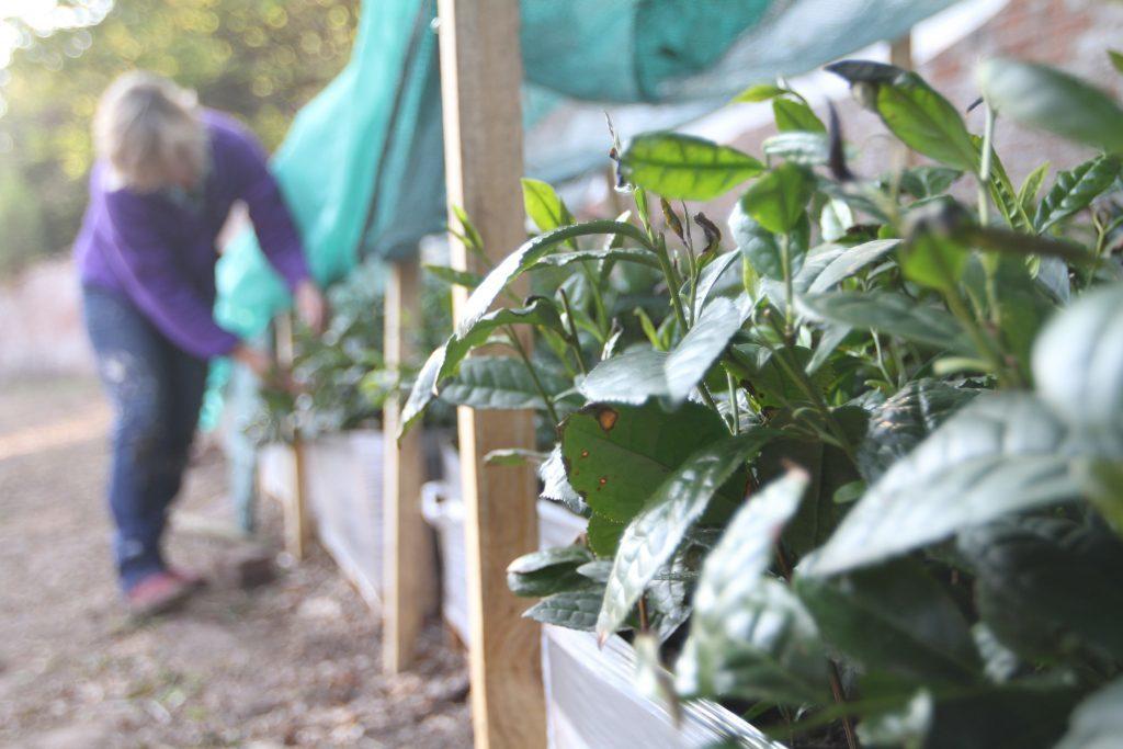 medw-artisan-tea-gardens-award3.jpg