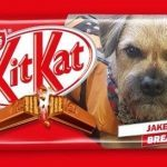 Ebay bidder takes the biscuit with £71 for Arbroath harbour dog's Jake-a-Break Kit Kat