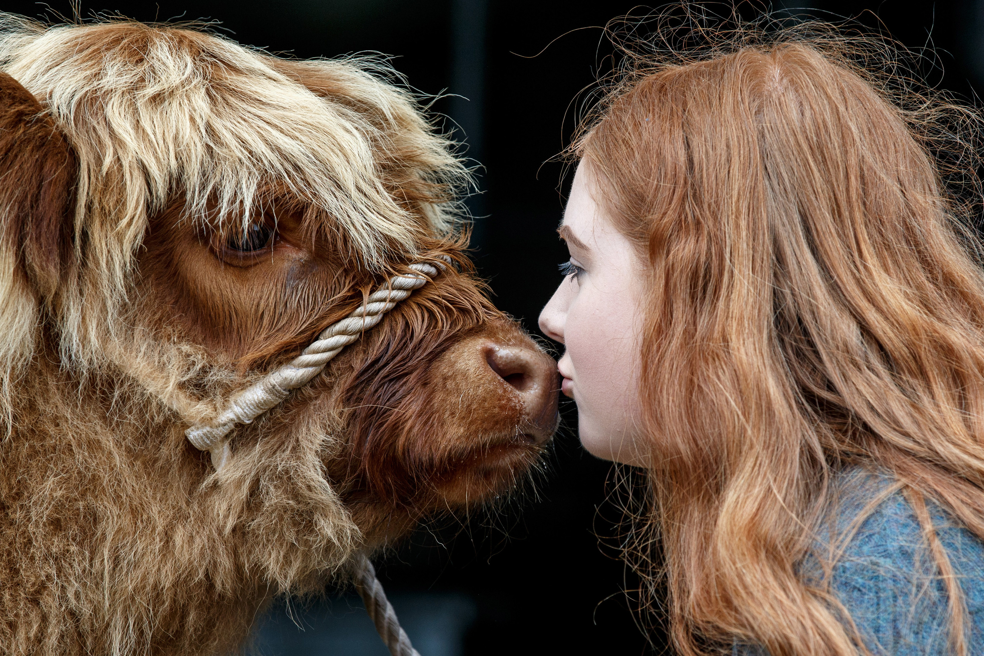 Laura Hunter (18) from Barnhill Farm, Shotts with a Highland calf before the 177th Royal Highland Show.