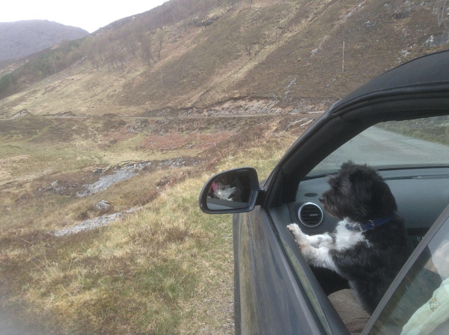 Bridget's dog Minnie enjoys the scenery.