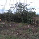 Car group deny tree removal harm at Kingsway site