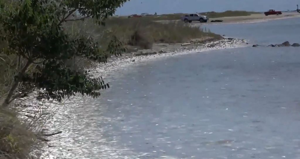 Thousands of dead and dying fish wash up on the shores of Texas.