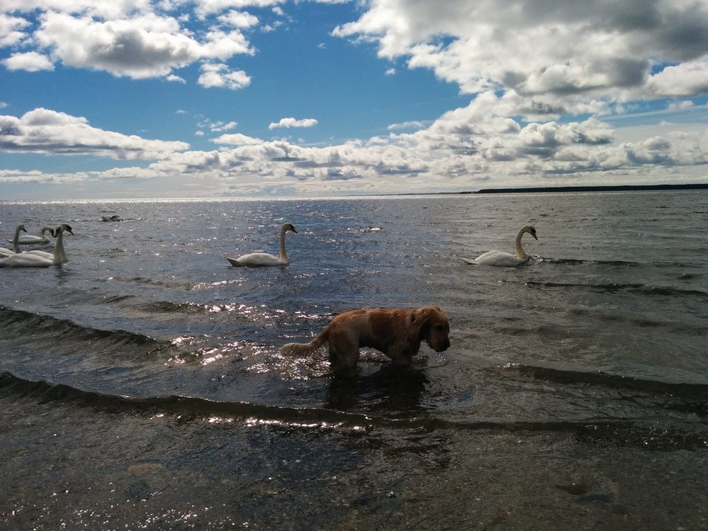 Enjoying the water at Monifieth.
