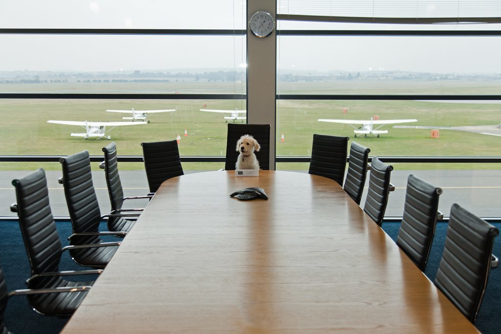 Take Your Dog to Work Day, June 23