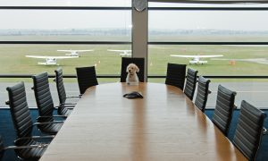 VIDEO: It's Bring Your Dog to Work Day today…are you taking part?