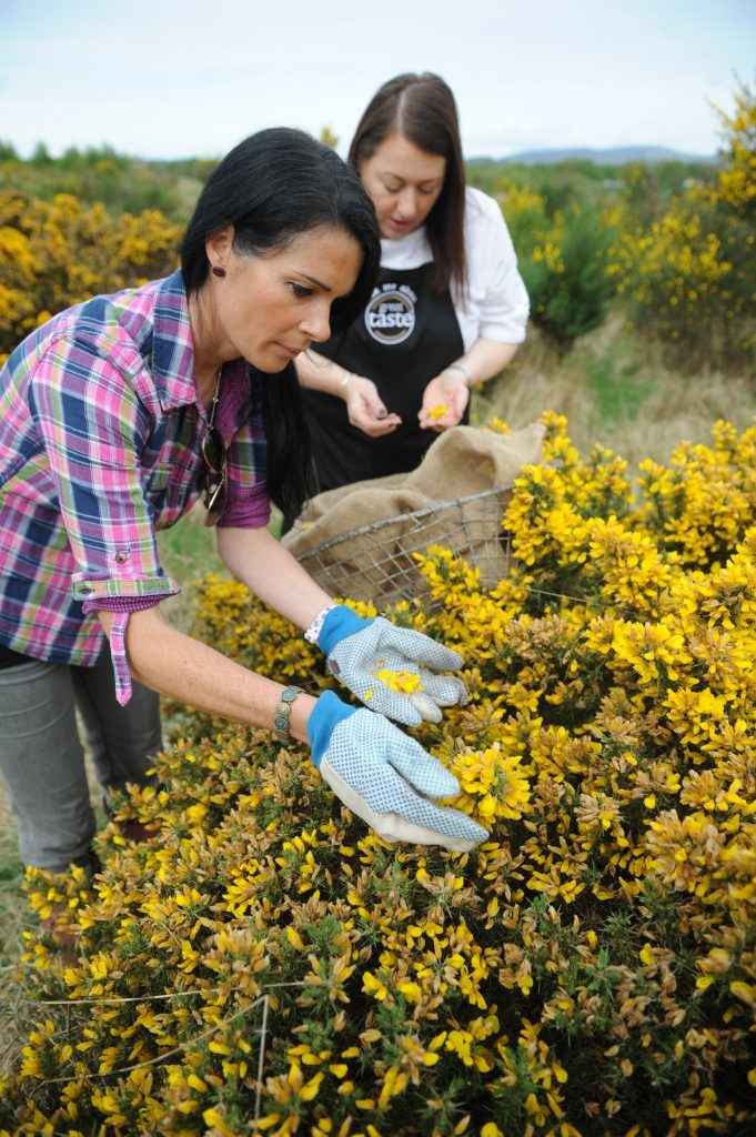 Trying to avoid being stabbed by gorse spikes!