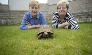Bought for 37p half a century ago, Timmy the Tortoise is still going strong