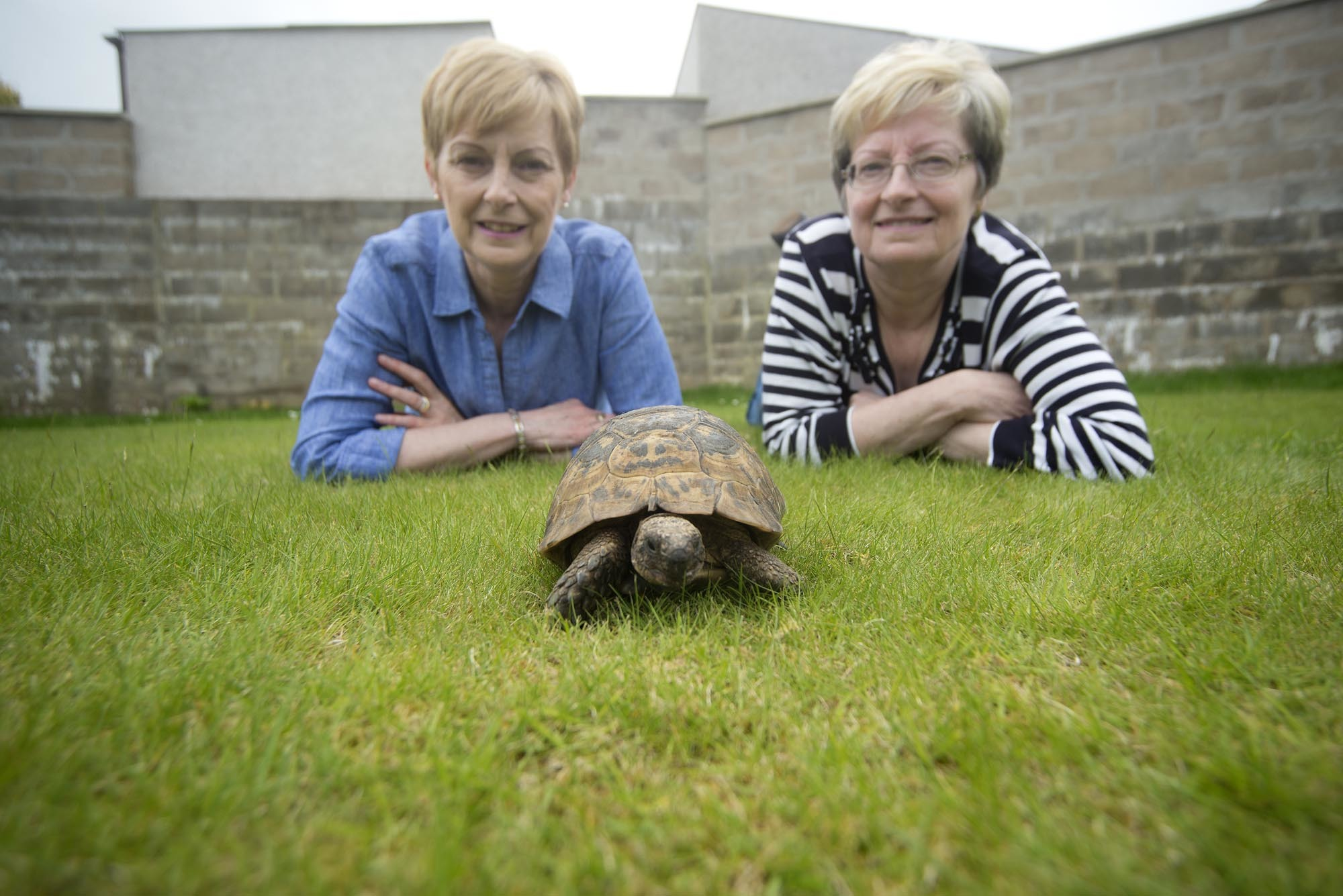 Twins Angela Russell-Taylor and Jacqueline Hall with Timmy the Tortoise, 50 years after they snapped him up for the princely sum of 37p.