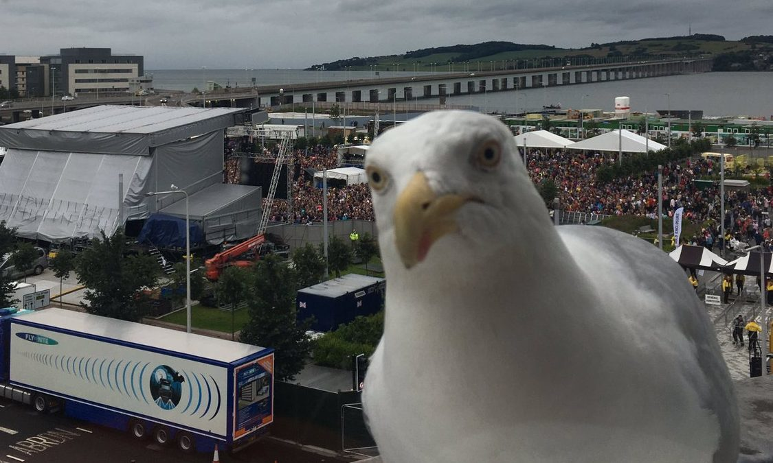 A herring gull photobombs the Little Mix picture.