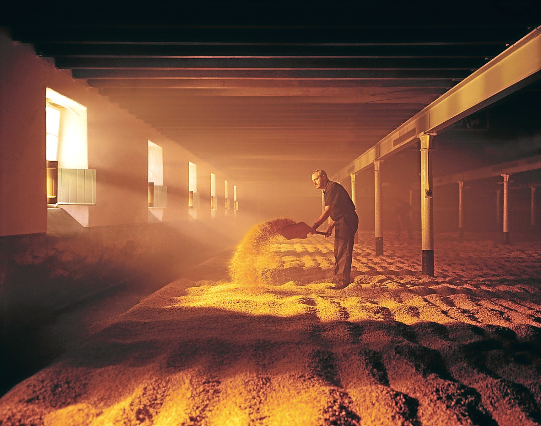Malting barley is turned at a whisky distillery in the highlands.