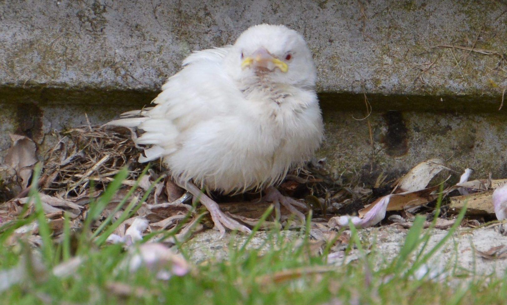 Pure white birds like the sparrow are rare.