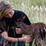 Real-life Bambi rescued from field in Perthshire