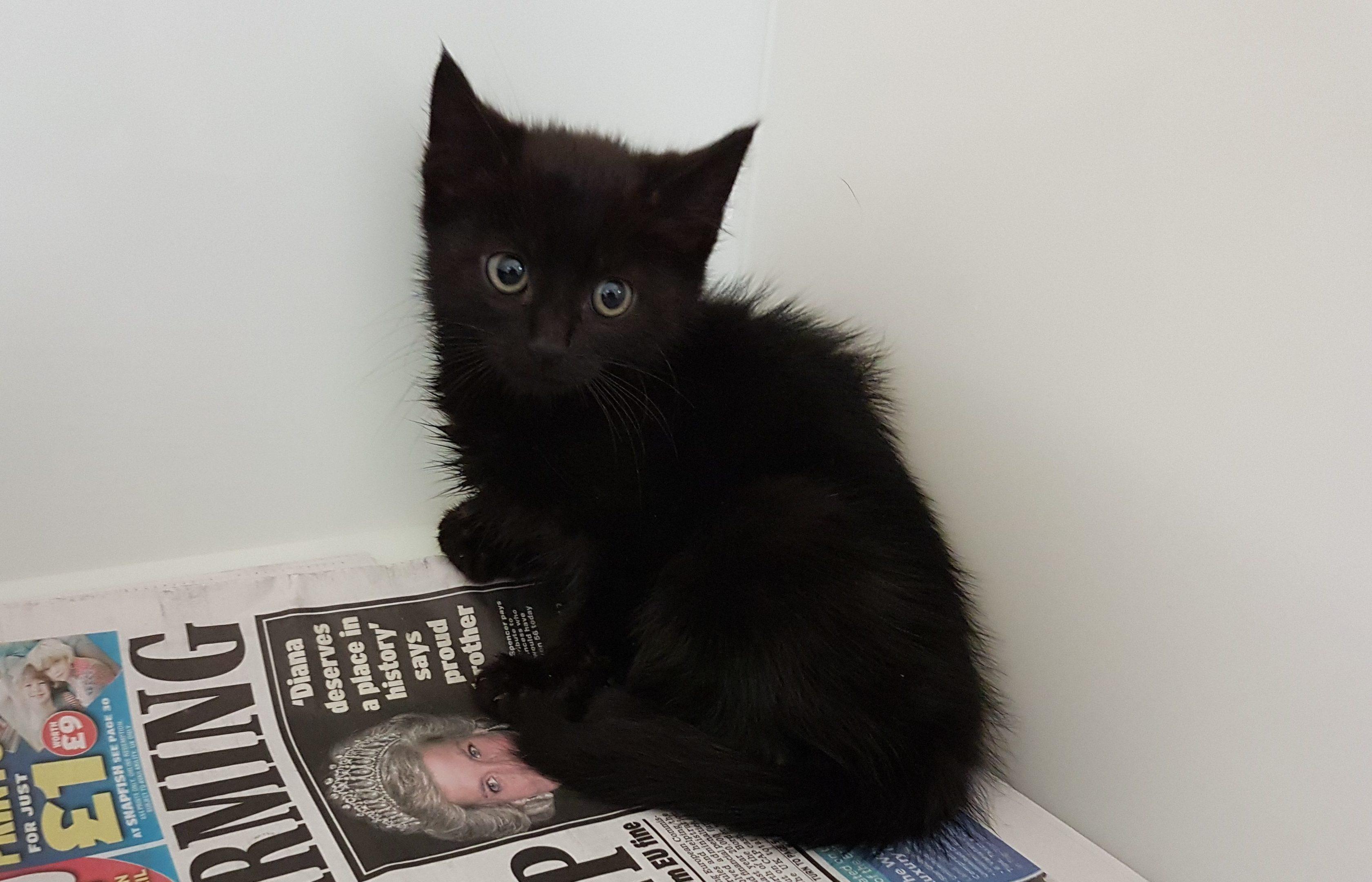 The kitten was found inside a bin near a restaurant.