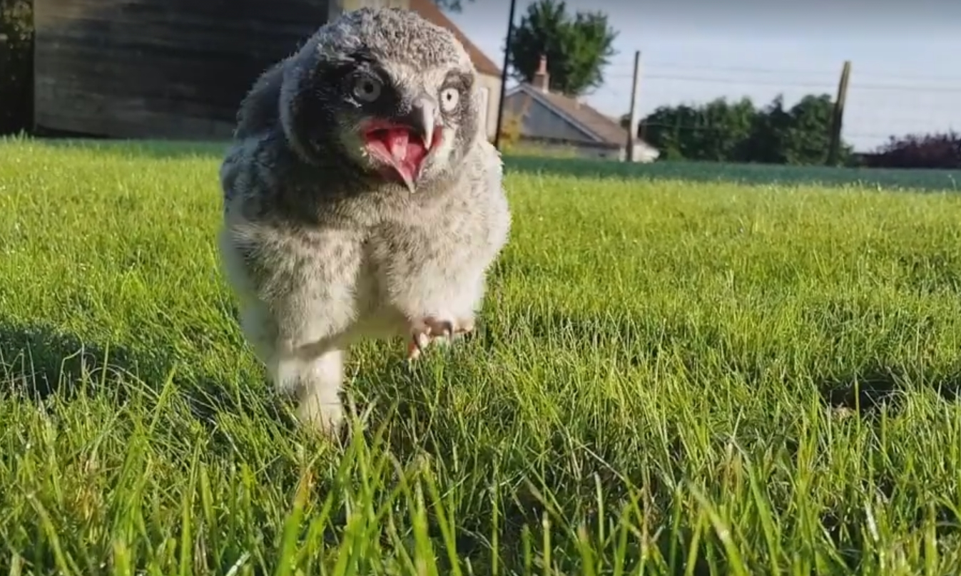 Terence goes for a walk.