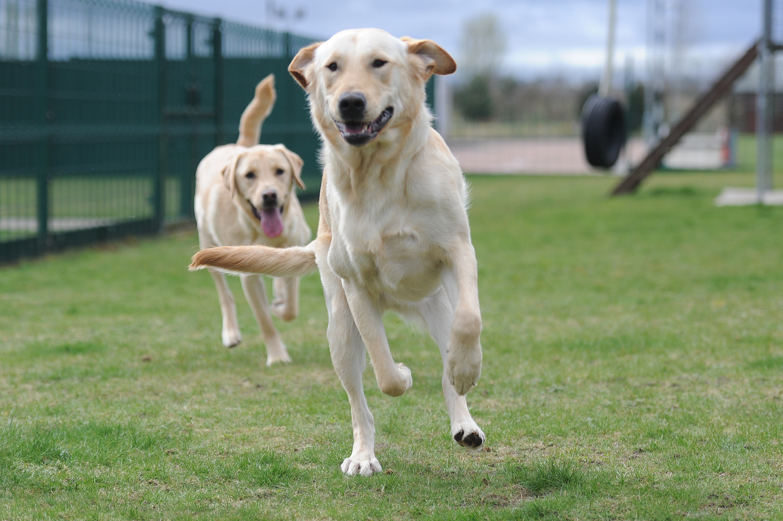 Cruel Electric Shock Dog Collars Banned In Scotland