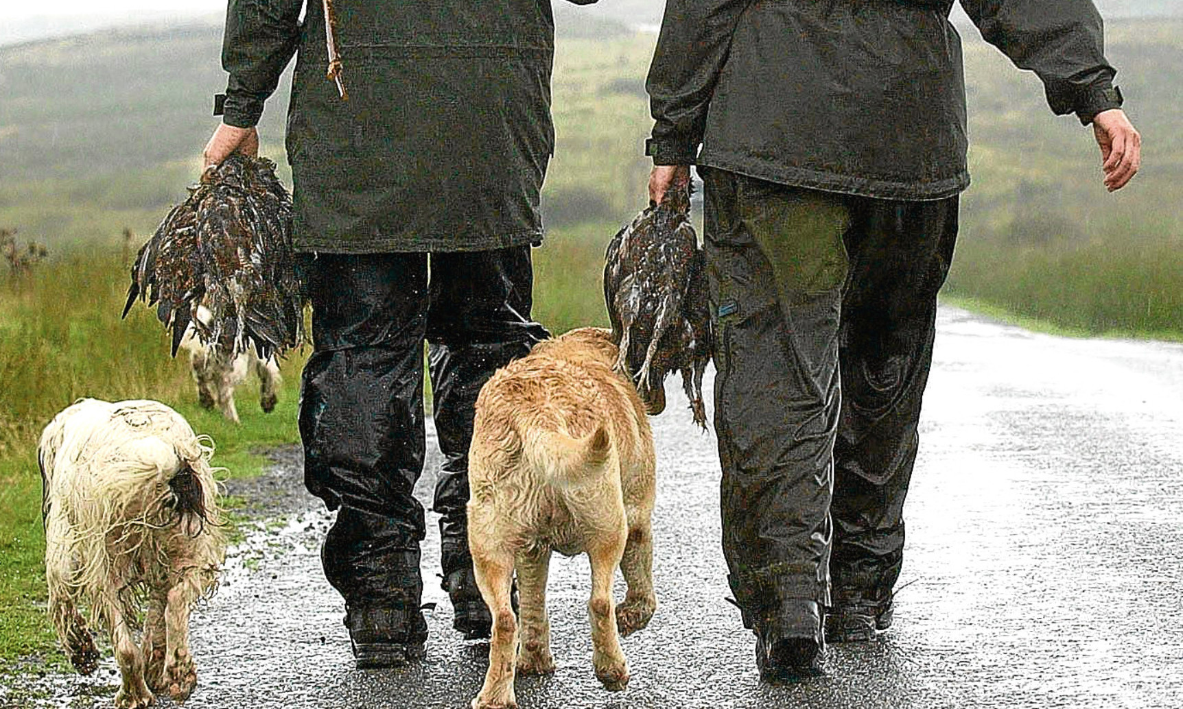 A shooting party returns from a grouse moor on the first day of the season.