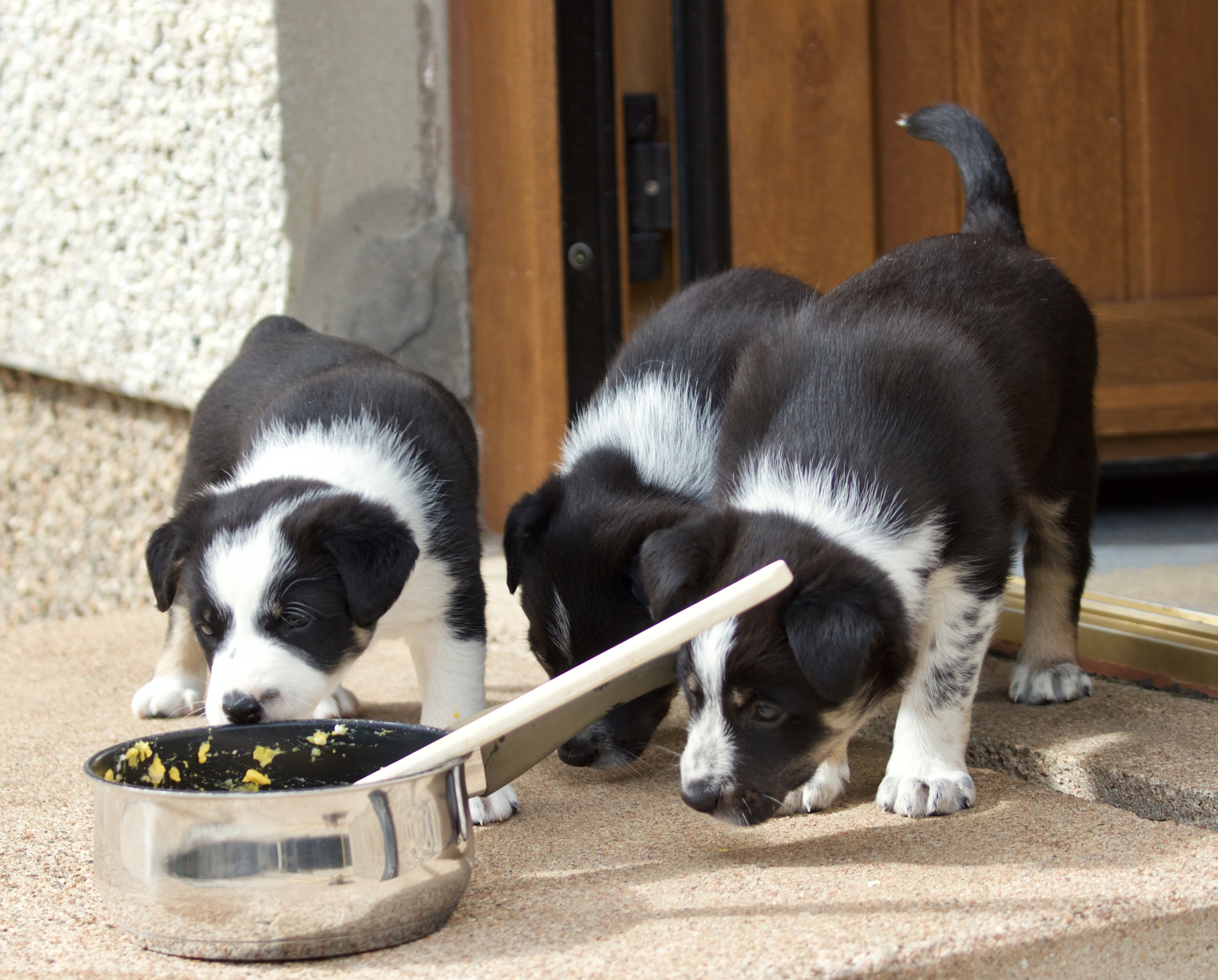 Puppies are the latest trainees on Armadale farm